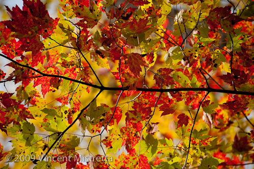 Fall Foliage at Macedonia Brook State Park