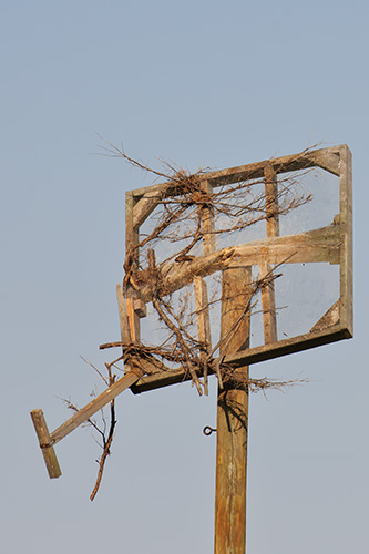 Osprey Nest Destroyed by Hurricane Irene