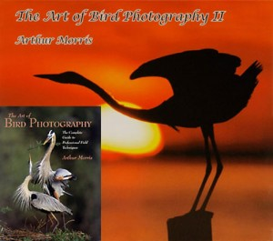 The Art of Bird Photography I & II