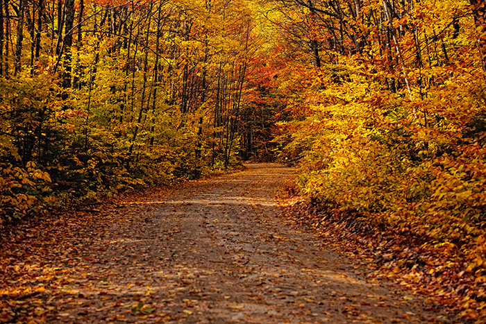 Main Rd. in Baxter State Park during fall after 3 day rain storm